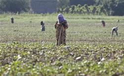 Женщины на хлопковом поле в пригороде Вахдата в центре Таджикистана 29 мая 2008 года. Душанбе и Бишкек расследуют второе за два месяца массовое убийство в пограничном районе Центральной Азии и опасаются дестабилизации в регионе, где не раз лилась кровь на фоне межэтнических распрей и хозяйственных споров беднейших слоев. REUTERS/Shamil Zhumatov