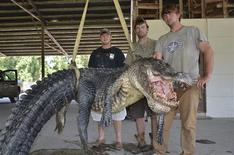 Mississippi Department of Wildlife, Fisheries and Parks photo shows Cole Landers (L), Dustin Bockman (C), and Ryan Bockman (brother of Dustin) pictured with their record setting alligator weighing 727 pounds (330 kg), and measuring 13 feet (3.96 m) taken in Vicksburg, Mississippi on September 1, 2013 and released on September 3, 2013. REUTERS/Ricky Flynt/Mississippi Department of Wildlife, Fisheries and Parks/Handout