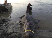 Dustin Bockman is pictured with his record setting alligator, weighing 727 pounds (330 kg) and measuring 13 feet (3.96 m), captured in Vicksburg, Mississippi on September 1, 2013, in this picture released to Reuters on September 3, 2013. REUTERS/Ryan Bockman/Handout via Reuters