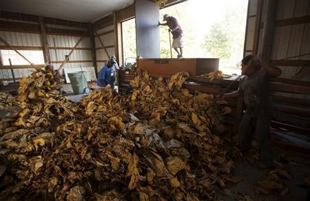 Workers bundle flue-cured tobacco at Shelly Farms in the Pleasant View community of Horry County, South Carolina July 26, 2013. REUTERS/Randall Hill