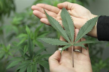 Consultant Angel Martos holds a marijuana leaf at the Canna Pi medical marijuana dispensary in Seattle, Washington, November 27, 2012. REUTERS/Anthony Bolante