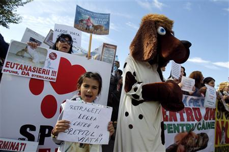''Ναι'' στην ευθανασία των αδέσποτων σκύλων είπε το Συνταγματικό Δικαστήριο της Ρουμανίας...