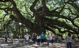 Vistitors check out the Angel Oak tree in Charleston, South Carolina September 24, 2013. REUTERS/Randall Hill