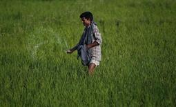 Фермер вносит удобрения в рисовое поле в окрестностях индийского города Сринагар 22 июня 2011 года. Российский монопольный производитель хлористого калия Уралкалий согласился дать скидку 12 процентов на поставки калия одному из крупнейших мировых потребителей продукции - Индии, сказал Рейтер топ-менеджер компании. REUTERS/Fayaz Kabli