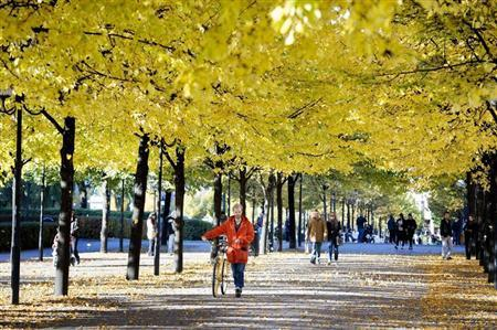 A man pushes his bicycle on a sunny autumn day down a tree-lined street in Stockholm October 13, 2013. REUTERS/Jessica Gow/TT News Agency