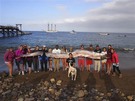 The crew of sailing school vessel Tole Mour and Catalina Island Marine Institute instructors hold an 18-foot-long oarfish that was found in the waters of Toyon Bay on Santa Catalina Island, California in this handout picture courtesy of the Catalina Island Marine Institute taken October 13, 2013. REUTERS/Catalina Island Marine Institute/Handout via Reuters