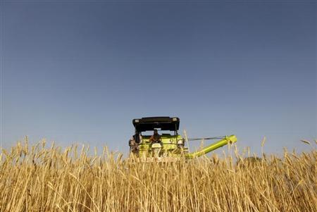 A combine harvester is used to harvest wheat in a field on the outskirts of Ahmedabad March 14, 2013. REUTERS/Amit Dave/Files