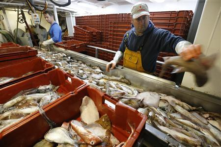 Fishermen sort fish aboard the Boulogne sur Mer based trawler 'Nicolas Jeremy' off the coast of northern France September 23, 2013. REUTERS-Pascal Rossignol