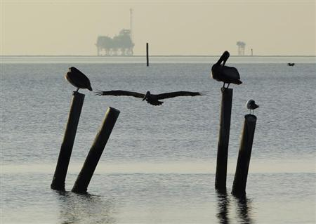 Pelicans sit on pilings along the Dauphin Island Parkway, Alabama May 5, 2010. REUTERS/Brian Snyder