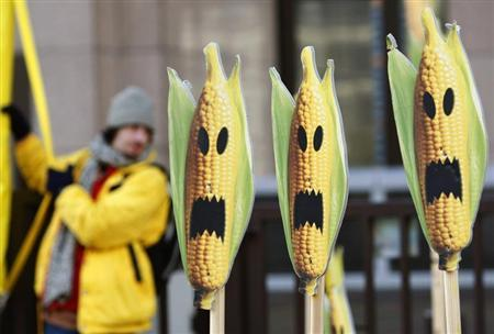 A Greenpeace activist displays signs symbolising genetically modified maize crops during a protest in front of the European Union headquarters in Brussels November 24, 2008. REUTERS/Thierry Roge