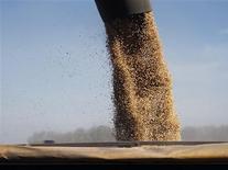 Granos de soja cargados en un camión en un campo en Chacabuco, Argentina, abr 24 2013. as fuertes precipitaciones del final de la semana pasada favorecerán la siembra y los rendimientos del maíz y la soja del ciclo 2013/14 de Argentina, que necesitaban agua en varias zonas productoras que estuvieron semanas sin lluvias, dijo el lunes un experto en clima. REUTERS/Enrique Marcarian