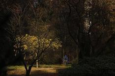 Человек сидит на скамейке в одном из московских парков 12 октября 2013 года. Короткая рабочая неделя в Москве будет облачной, дождливой, но необычайно теплой для начала ноября, ожидают синоптики. REUTERS/Maxim Shemetov