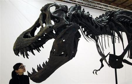 A curator poses in front of a Tyrannosaurus rex fossil replica display during a media preview of the ''Playing with Dinosaurs'' exhibition at the National Chiang Kai-Shek Memorial Hall in Taipei December 7, 2009. REUTERS/Nicky Loh/Files