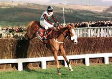 Jockey Tony McCoy riding Mr Mulligan jumps the last fence at Cheltenham race course March 13 . SPORT HORSERACING - RTR2EYG
