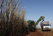 Trabalhadores colhem cana-de-açúcar em uma fazenda em Maringá. A Cosan, empresa de infraestrutura e energia, disse que as chuvas ocorridas no terceiro trimestre devem fazer a companhia estender a moagem de cana até dezembro, ante o prazo inicial previsto para encerramento dos trabalhos no final de novembro, disse o presidente da companhia em conferência com jornalistas. 13/05/2011. REUTERS/Rodolfo Buhrer/La Imagem (BRAZIL - Tags: AGRICULTURE BUSINESS) - RTR2MF1I