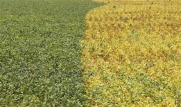 Vista aérea de plantação de soja na cidade de Primavera do Leste, em Mato Grosso. O plantio da soja no Brasil atingiu 59 por cento da área prevista na atual temporada, incremento de 11 pontos percentuais na semana, com o avanço dos trabalhos nos principais Estados produtores aproximando-se da etapa final, informou a AgRural. 7/02/2013. REUTERS/Paulo Whitaker