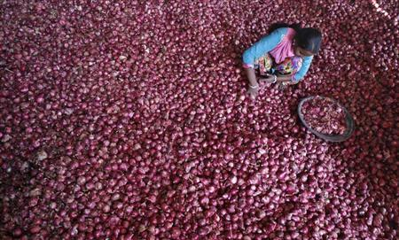A labourer spreads onions for sorting at a wholesale vegetable market in Chandigarh October 29, 2013. REUTERS/Ajay Verma
