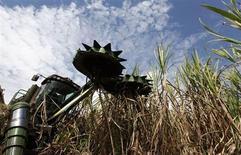 Colheitadeira corta cana-de-açúcar em uma propriedade, em Piracicaba. As usinas do centro-sul do Brasil processaram 38,78 milhões de toneladas de cana na segunda quinzena de outubro, alta de 24 por cento ante a quinzena anterior, que havia sido prejudicada por chuvas, informou nesta terça-feira a União da Indústria de Cana-de-Açúcar (Unica). 29/07/2010. REUTERS/Nacho Doce