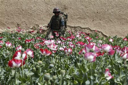 An Afghan army soldier walks through a poppy field during a joint mission with U.S. Army soldiers from Charlie troop 4-73 Cavalry Regiment, 4th Brigade, 82nd Airborne Division in the Maiwand district in Kandahar province, southern Afghanistan in this April 7, 2012 file photograph. REUTERS/Baz Ratner/Files