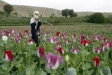 Мальчик идет по маковому полю в провинции Джелалабад, Афганистан 7 апреля 2013 года. Выращивание опийного мака достигло рекордных уровней в Афганистане, который покидают войска международной коалиции во главе с США, сообщила в среду Организация объединенных наций. REUTERS/Parwiz