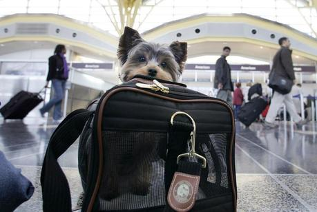 Pet Owners Warn of Perils of Air Travel, Seek New Federal Rules