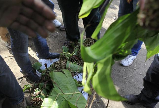 People crowd to pick their choice of qat sticks at an open air wholesale market in Kenya's capital Nairobi July 10, 2013. REUTERS/Noor Khamis