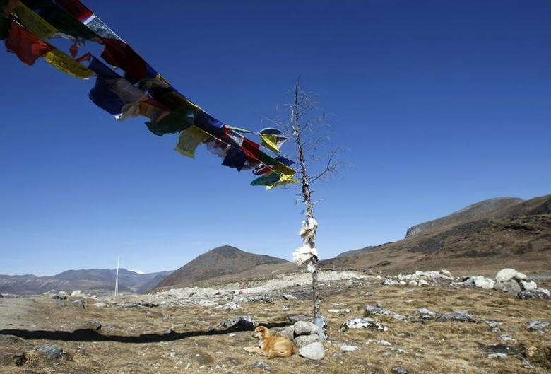 A dog rests on the Indian side of the Indo-China border at Bumla, in the northeastern Indian state of Arunachal Pradesh, November 11, 2009. REUTERS/Adnan Abidi