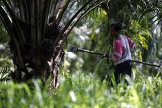 Работник на пальмовой плантации в Сепанге 2 января 2008 года. Российский калийный гигант Уралкалий, вышедший этим летом из картеля с Беларуськалием, будет продавать удобрения в Юго-Восточной Азии вместе с Федеральным агентством по развитию земель Малайзии (FELDA). REUTERS/Bazuki Muhammad