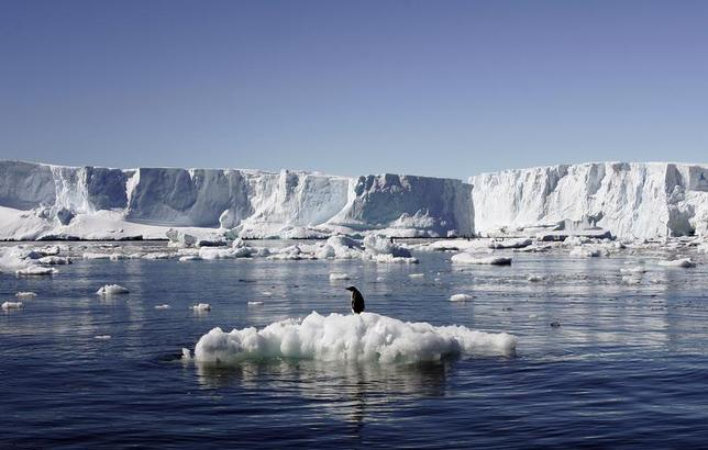 An Adelie penguin stands atop a block of melting ice near the French station at Dumont d'Urville in East Antarctica January 23, 2010. REUTERS/Pauline Askin