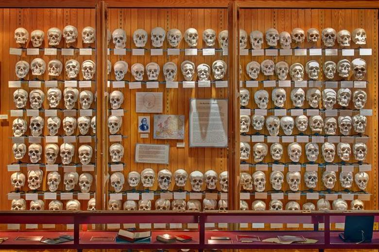 The Hyrtl Skull Collection is photographed in the Mutter Museum of The College of Physicians of Philadelphia in Philadelphia, Pennsylvania June 11, 2009 in this handout image released to Reuters on December 11, 2013. REUTERS/George Widman