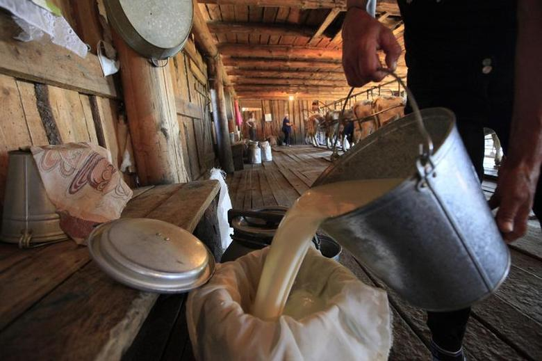 An employee pours milk as cows are milked in the background at the Antsiferovskoye Farm in the village of Antsiferovo, some 415 km (258 miles) north of Russia's Siberian city of Krasnoyarsk, July 24, 2013. REUTERS/Ilya Naymushin