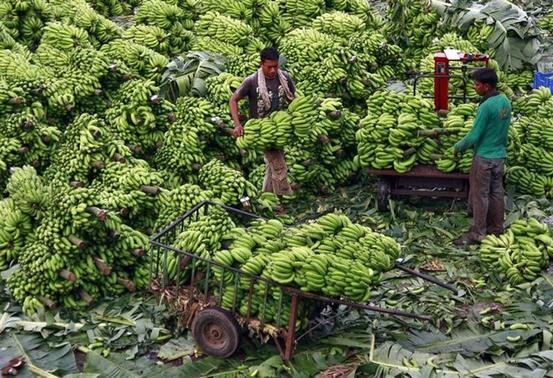A workers carries bananas to load them into a cart after weighing them at a wholesale market in Kochi November 28, 2013. REUTERS/Sivaram V/Files