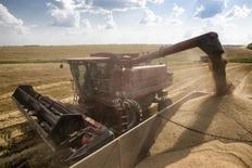 Una cosechadora carga granos en un camión de transporte cerca de la sureña ciudad ucraniana de Nikolaev. 7 de julio, 2013. La consultora agrícola UkrAgroConsult elevó el martes su pronóstico para la cosecha de granos de Ucrania en el 2013 en un 0,9 por ciento, a 56,5 millones de toneladas, desde 56,0 millones debido a una recolección de maíz mayor a la esperada. REUTERS/Vincent Mundy (UCRANIA - AGRICULTURA NEGOCIOS)