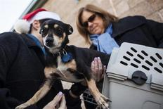 A dog is loaded into a crate at Front Street Animal Shelter in Sacramento, California, for a flight of 50 dogs to a no-kill shelter in Idaho, December 9, 2013.REUTERS/Max Whittaker