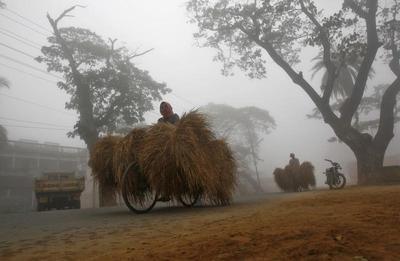 Foggy Winter