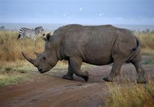 Un permis de chasser un rhinocéros noir en Namibie a été vendu aux enchères pour 350.000 dollars (256.000 euros) samedi à Dallas, aux Etats-Unis. /Photo d'archives/REUTERS/Marko Djurica