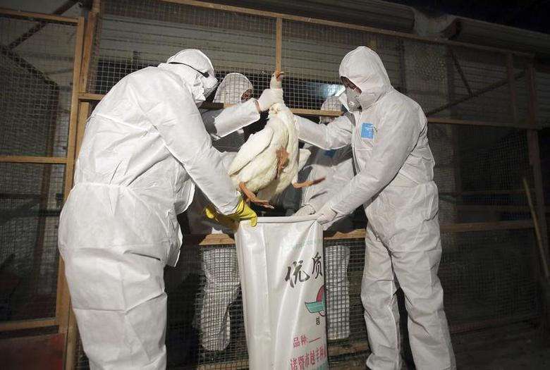 Health officials in protective suits put a goose into a sack as part of preventive measures against the H7N9 bird flu at a poultry market in Zhuji, Zhejiang province January 5, 2014. REUTERS/Stringer