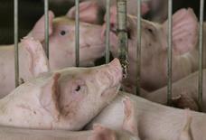 Porcos bebem água em uma fazenda em Lucas do Rio Verde, no Mato Grosso. As exportações brasileiras de carne suína recuaram 11,04 por cento em 2013, atingindo 517,33 mil toneladas, informou a Associação Brasileira da Indústria Produtora e Exportadora de Carne Suína (Abipecs) nesta terça-feira. 28/02/2008 REUTERS/Paulo Whitaker