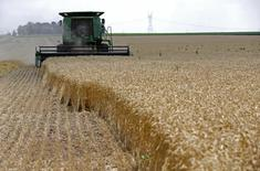 A combine drives over stalks of soft red winter wheat during the harvest on a farm in Dixon, Illinois, July 16, 2013. REUTERS/Jim Young