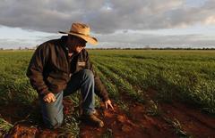 O fazendeiro australiano Ben West indica seu plantio de trigo em sua fazenda em Condobolin. A Austrália pode esperar ondas de calor ainda mais longas e intensas do que a que atualmente atinge amplas áreas do país, disse nesta quinta-feira um grupo de pesquisa climática, levantando dúvidas sobre a posição a longo prazo do país como uma potência agrícola. 05/07/2011 REUTERS/Daniel Munoz