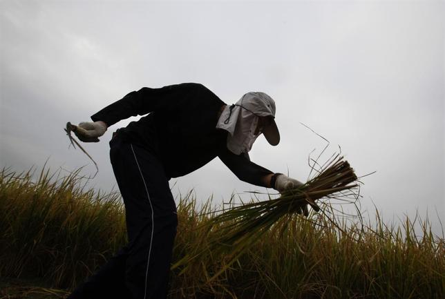 A volunteer works in one of the last paddy fields at Hong Kong's New Territories, near the border with Shenzhen November 6, 2013. REUTERS/Bobby Yip