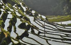 Fazendeiro caminha em meio a terraços no condado Suichuan, na província Jiangxi, China. As prioridades da política da China em 2014 serão a melhoria do ambiente rural e a manutenção da segurança alimentar, disse a agência oficial de notícias Xinhua, citando um documento-chave que deverá ser lançado neste domingo. 1/06/2013. REUTERS/China Daily