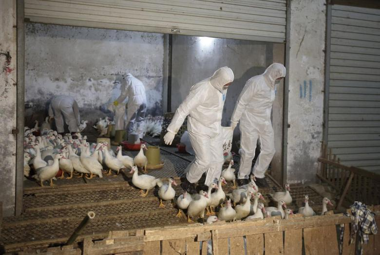 Health officials in protective suits transport sacks of poultry as part of preventive measures against the H7N9 bird flu at a poultry market in Zhuji, Zhejiang province January 6, 2014. REUTERS/Stringer