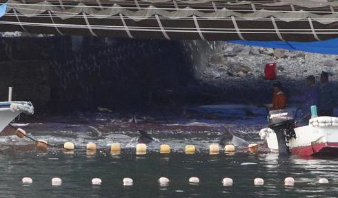 Japan fishermen take cover to slaughter dolphins in face of Western criticism