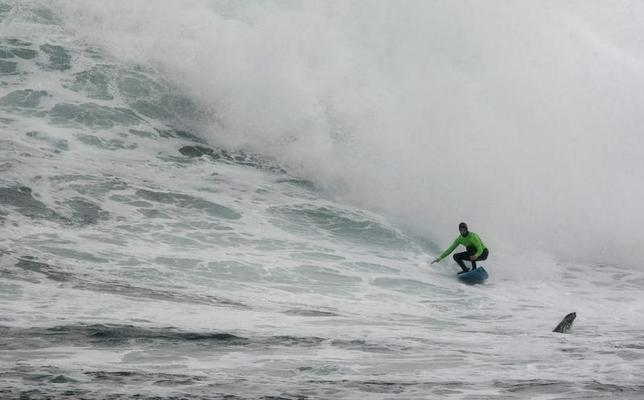 A seal pops up as South Africa's Grant 'Twiggy' Baker rides a wave to win the 2008 Big Wave Africa surfing event held at Dungeons Reef off Cape Town's Hout Bay, July 26, 2008. REUTERS/Mike Hutchings