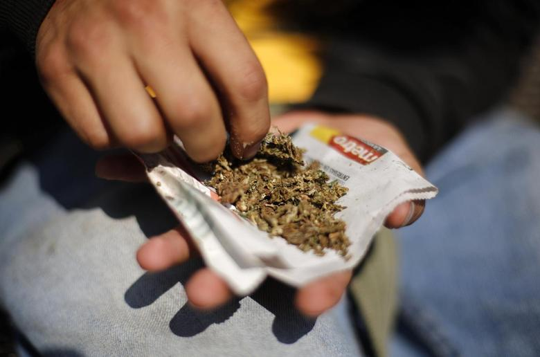 A man shreds marijuana during a rally to hand out information and collect signatures for marijuana legalization outside the Senate building in Mexico City January 22, 2014. REUTERS/Tomas Bravo