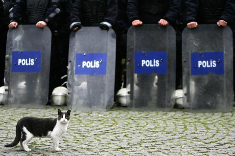 A cat strolls past Turkish police as they stand guard outside Sultanahmet, or Blue Mosque in Istanbul November 30, 2006. REUTERS/Damir Sagolj