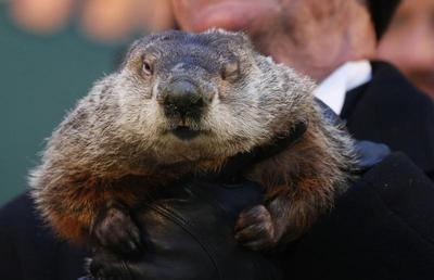 Same old Groundhog Day; Phil predicts more winter