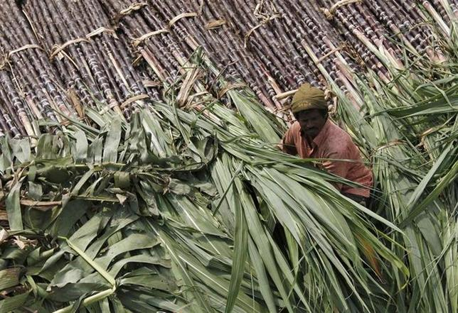 A trader sits on a pile of sugarcane as he waits for customers at a wholesale market in Chennai January 12, 2014. REUTERS/Babu/Files