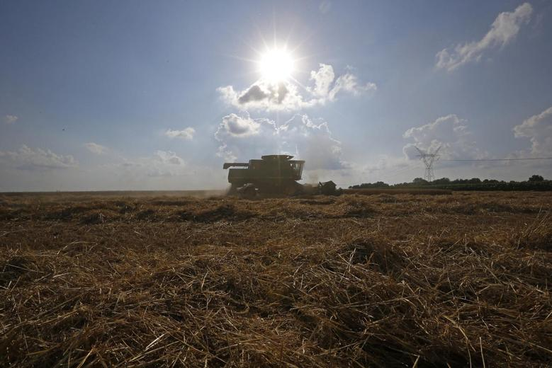 A combine drives past the piles of straw that is left over from the harvesting of soft red winter wheat on a farm in Dixon, Illinois, July 16, 2013. REUTERS/Jim Young